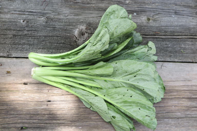green chard (unknown variety)