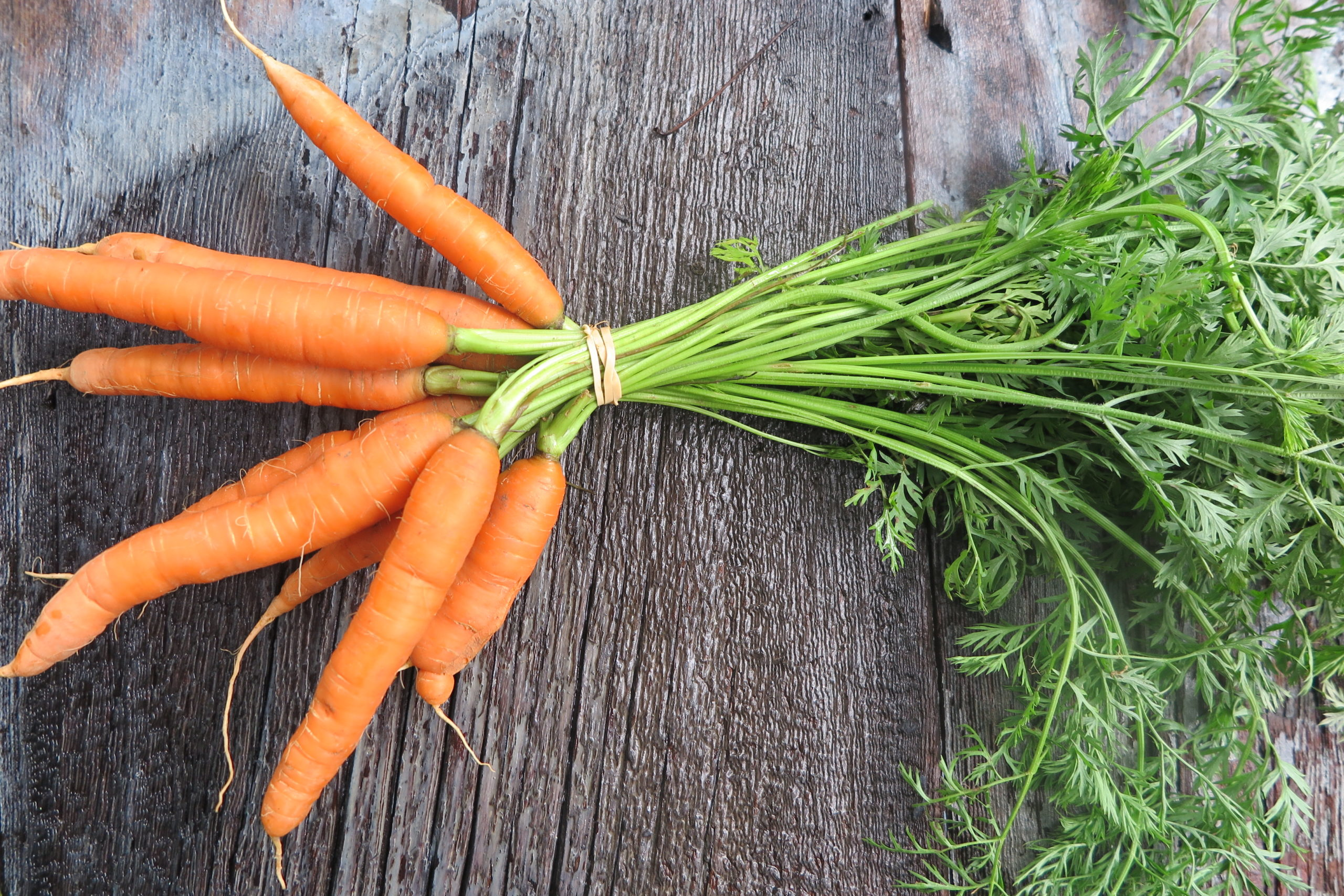 bunch of young carrots