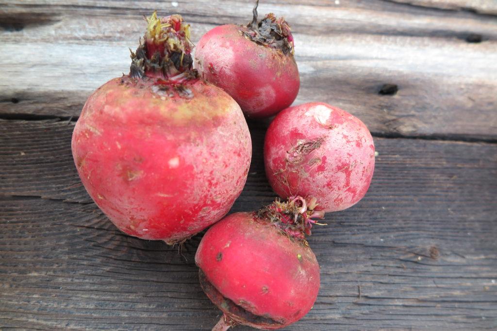 four chioggia beets
