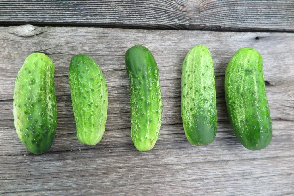 five pickling cucumbers