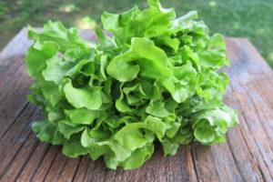 butterhead lettuce?