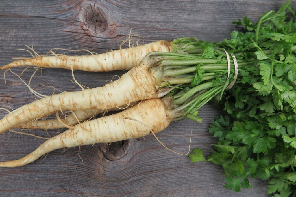 bunch of parsley root