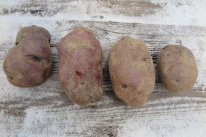 purple potatoes