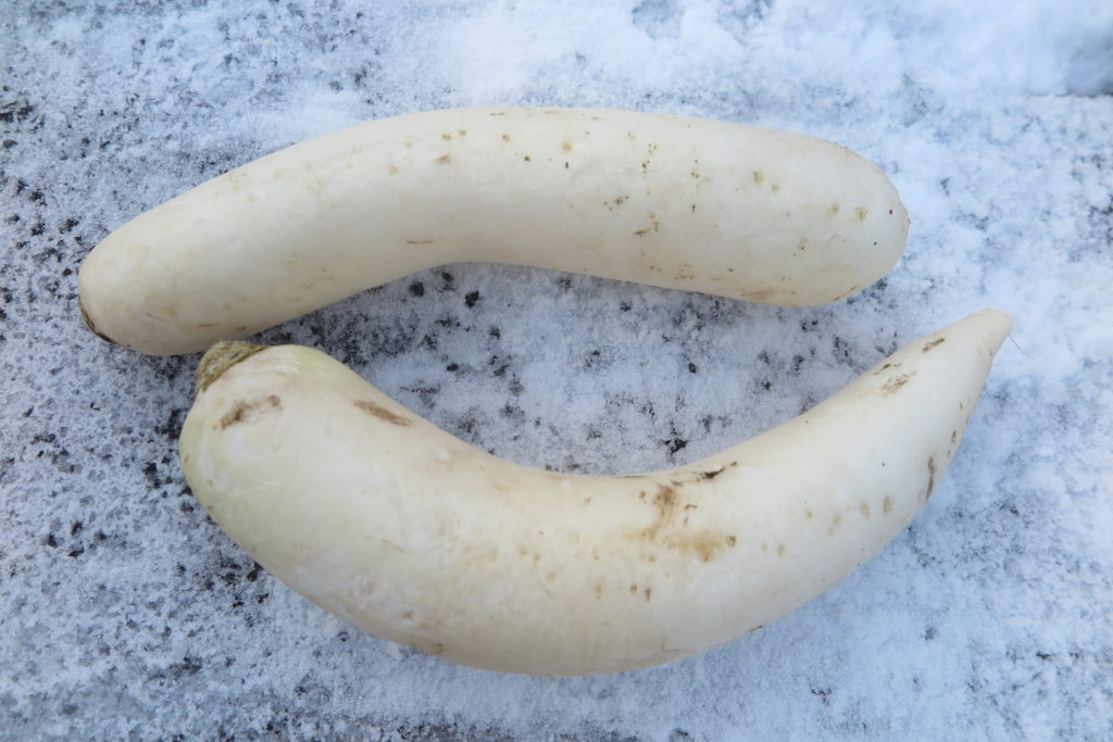 two daikon radishes