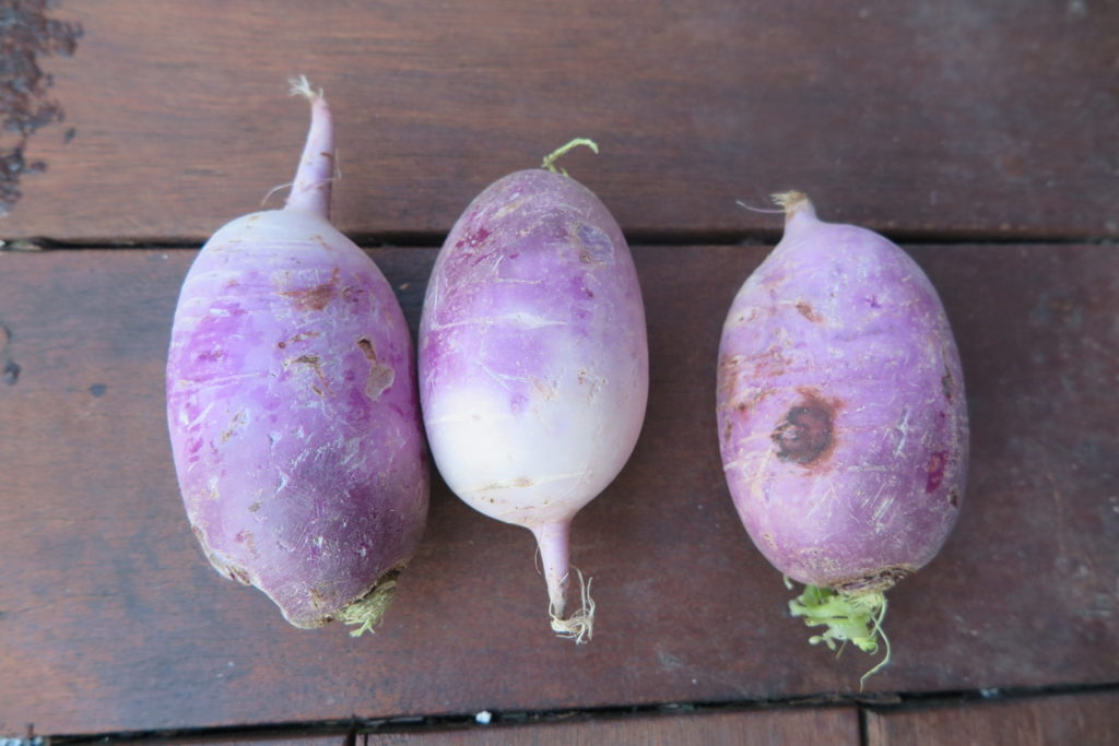 three purple mu radishes
