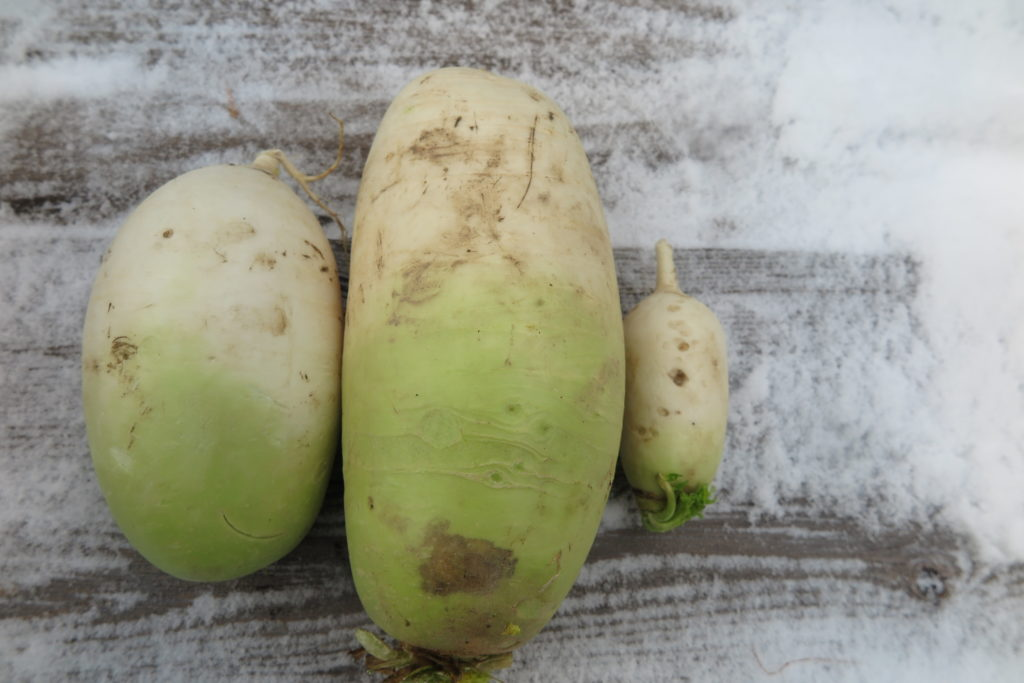 three white mu radishes