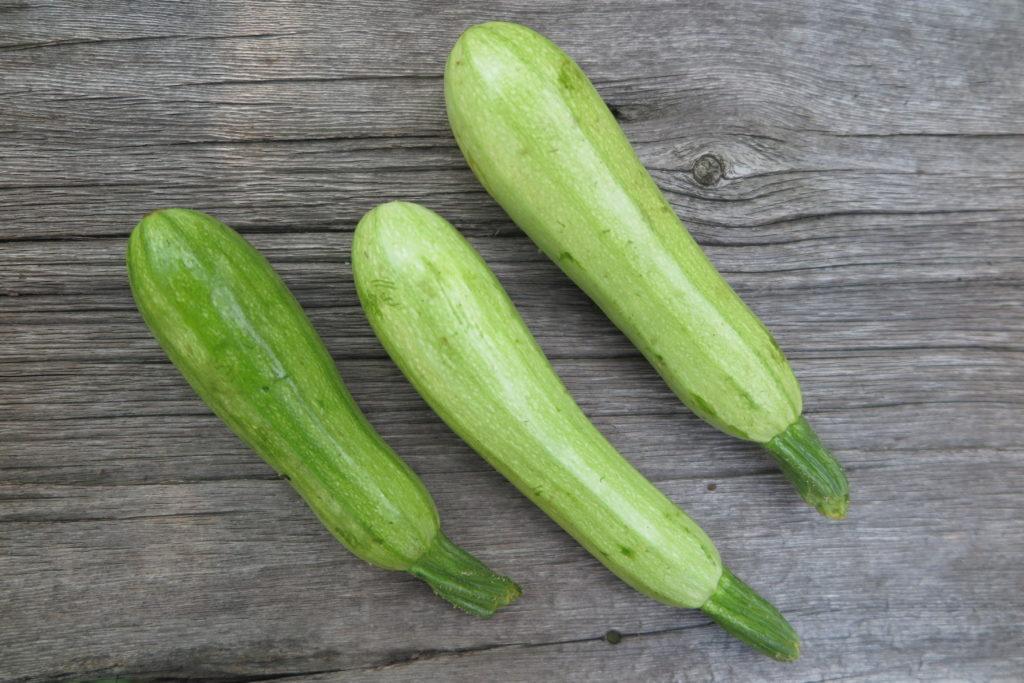 tatuma squash (3)