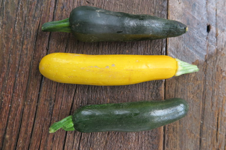yellow and green zucchini