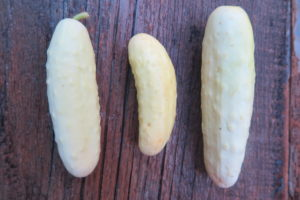 three silver slicer cucumbers