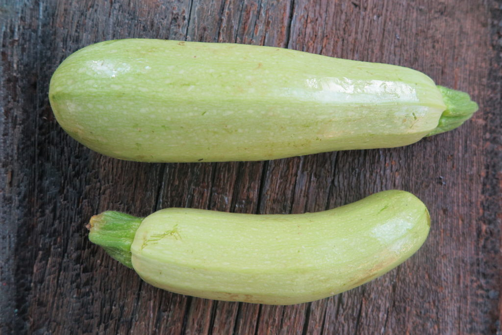 two yellow zucchinis