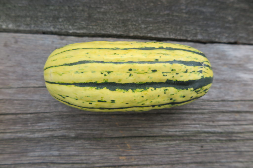 One yellow squash with dark green indented stripes on a wood background