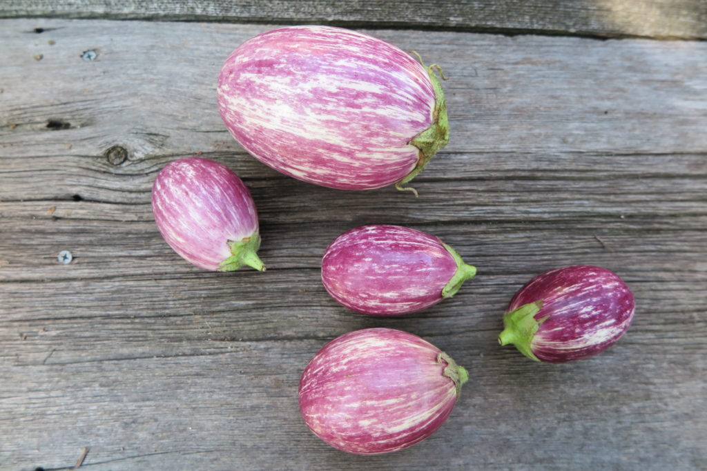 One large and four small pink and purple deckled eggplants on a light wood background